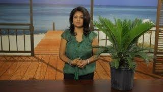 How to Pot Sago Palms : Gardening Tips