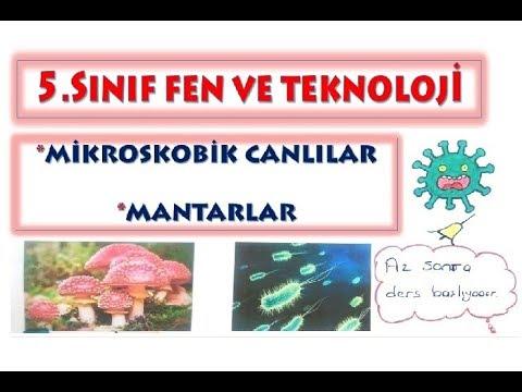 5 Sınıf Mikroskobik Canlılar