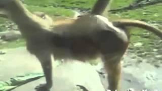 Những khoảnh khắc hài hước nhất của động vật   Bunny Wickfoxy   Go vn