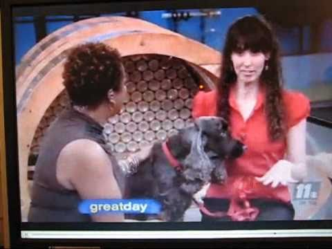 Bobbi Leder featured on Great Day Houston for Dogs and the Women Who Love Them