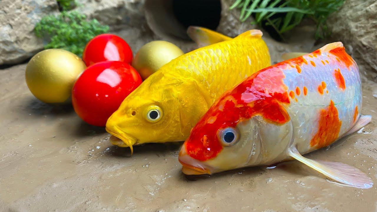 STOP MOTION KOCHEN - KOI Fische Und Ihre Bunte Golden Eier | ASMR Mukbang Funny Videos