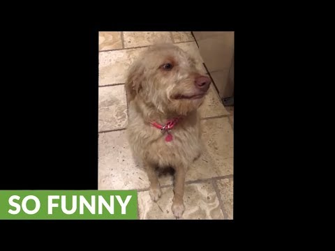 Guilty dog adorably smiles through Grandma's reprimand