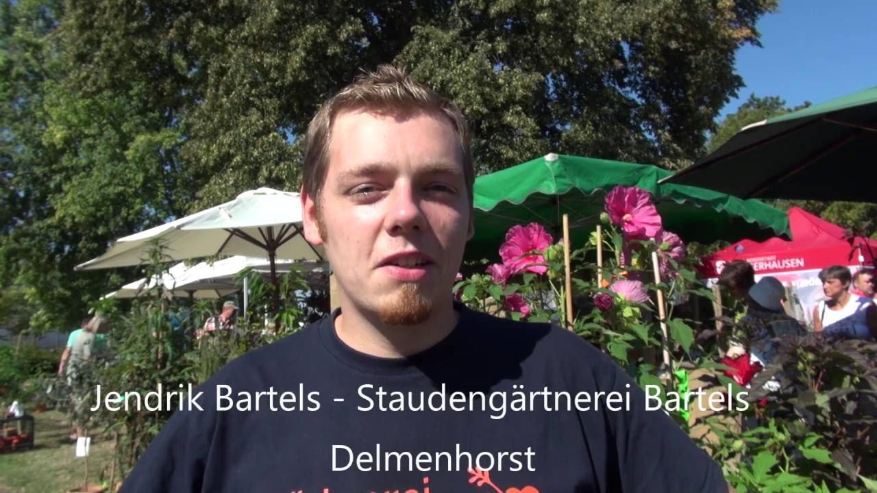 Gärtnerei Bartels Hibiskus Stauden Youtube
