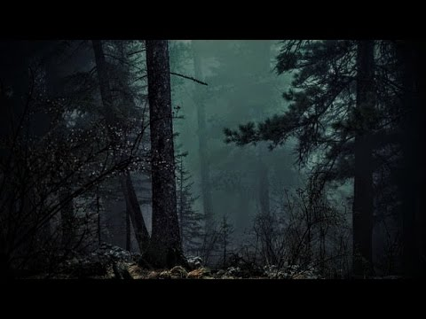 FOREST AT NIGHT - Crickets Owls Rain Wind in Trees - Relax Study Sleep De-Stress 🎧 100% RELAX
