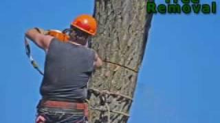 Beaver Tree Removal - London
