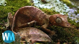 Top 10 Animals With Amazing Camouflage thumbnail