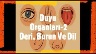 6. Sınıf Duyu Organları Konu Anlatımı - 2 (Burun, Dil, Deri)
