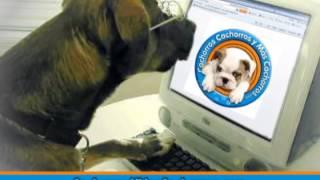 CachorrosyMasCachorros