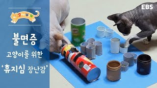 [고부해] 불면증 고양이를 위한
