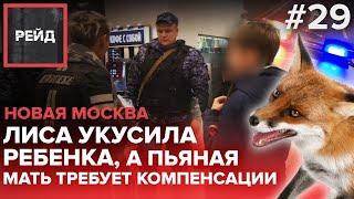Лиса укусила ребенка, а пьяная мать требует компенсации   Росгвардия   Новая Москва - Рейд #29