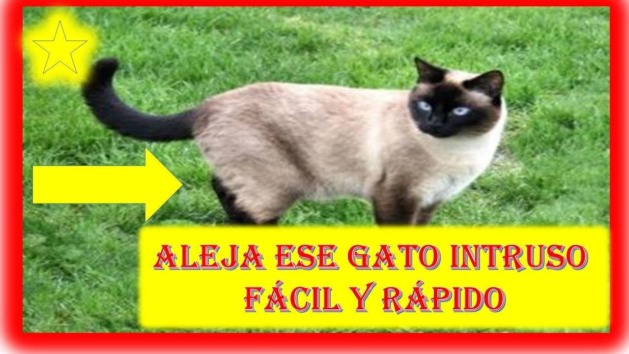 Como alejar los gatos de nuestra casa youtube for Alejar gatos del jardin
