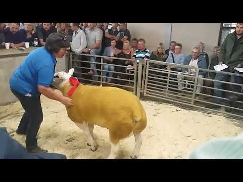 Texel Society English National Sale 2017