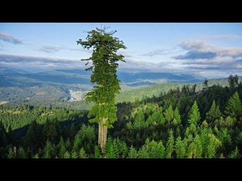 9 Unusual Nature Glitches