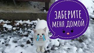 Васю Никто не берет 😢он продолжает жить зимой  на улице