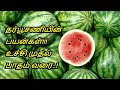 Benefits of Watermelon in Tamil | Diabetes - Cancer - Weight loss | Healthy Life - Tamil.
