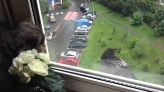 Одинокий голубь на карнизе за окном...