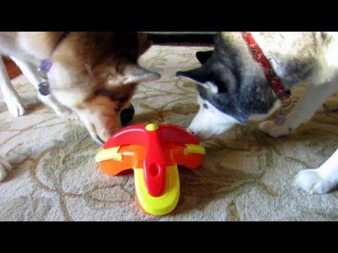 Treat Triad Puzzle Toy - Kyjen - Siberian Husky Approved - Boycott Boring Dog Toys
