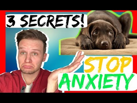 How To Stop Dog Anxiety - 3 Secret Tips - Dog Anxiety Training That Works Fast!
