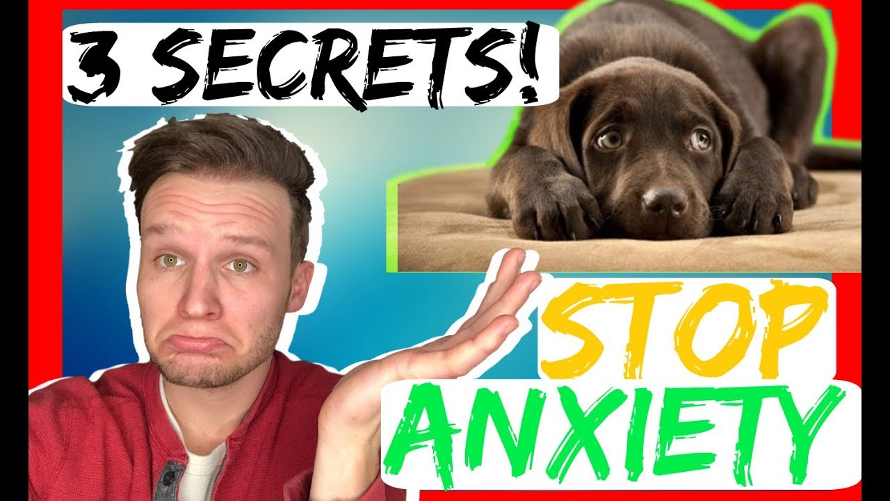 Download How to stop dog anxiety - 3 Secret tips - dog anxiety training that works fast!