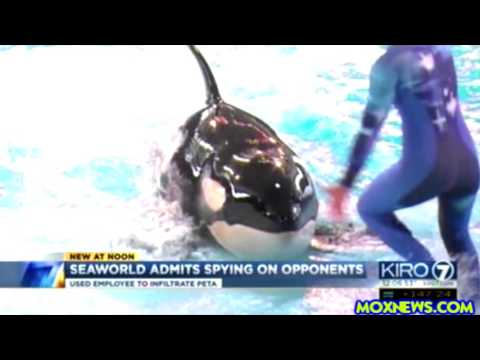 Seaworld Admits Planting Spy In Animal Rights Activist Group