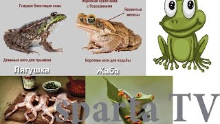 Как отличить Лягушку от Жабы \ how to distinguish a frog from a toad