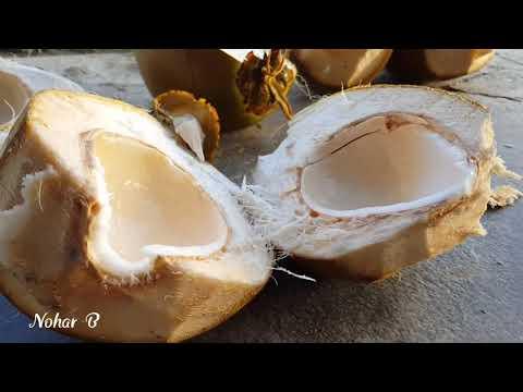 Kokosnoot. K tot en met Z. All about the coconut. Sweet water and gelly. Awahoessenweg. Nickerie.