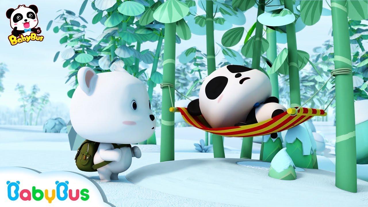 Ai mới là gấu trúc Kiki | Hoạt hình hay cho bé | Hoạt hình gấu trúc | BabyBus vietnamese