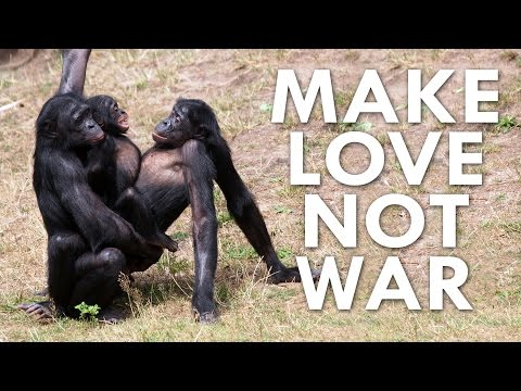 Can a Bonobo Beat you at Pac-Man?