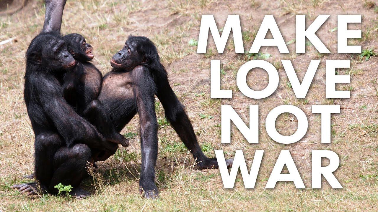 Monkeys having sex with human