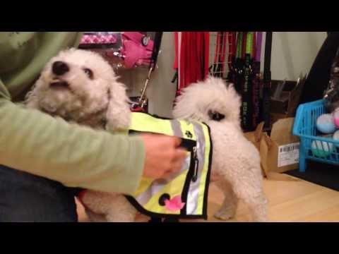 Best Reflective Dog Vests | Keep Doggie Safe