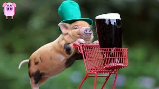 15 St Patrick's Day Facts That Will Make Your Friends Green With Envy -  SlappedHamTV Top 10 Video
