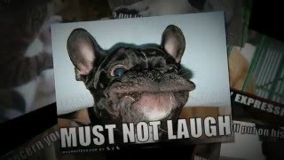 Funny Animal Pictures with Captions - Just Try Not To Laugh