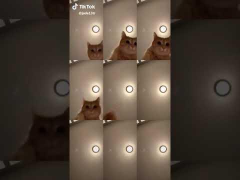 Tik Tok Mr. Sandman Cat