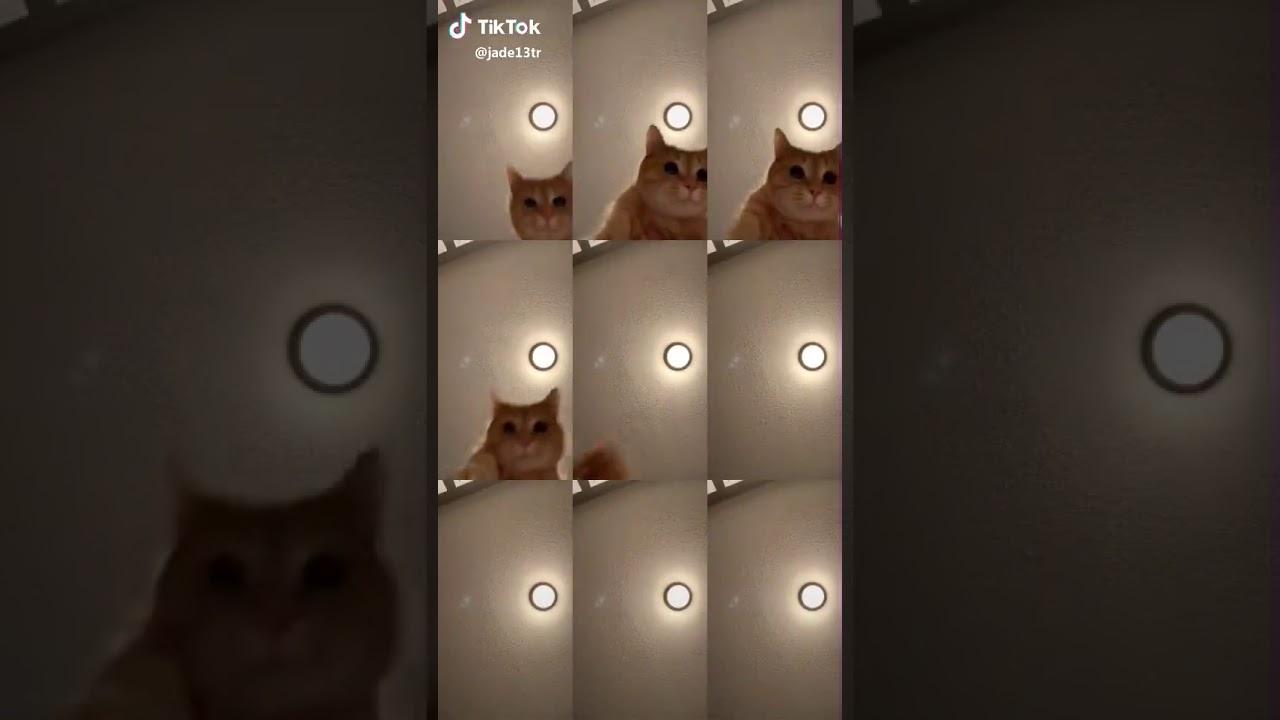 Tik Tok Mr Sandman Cat Youtube