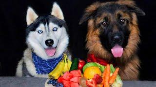 DOG REVIEWS FOOD WITH HUSKY SISTER!