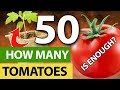 Why I Grow 50 Tomato Plants A Year
