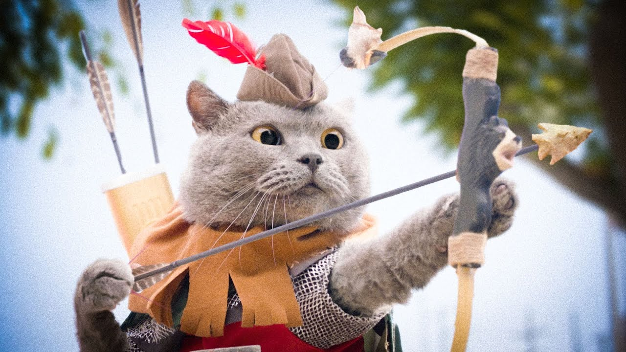 The battle of the cat and the dragon, the battle for the crown of the cat king, the funny cat