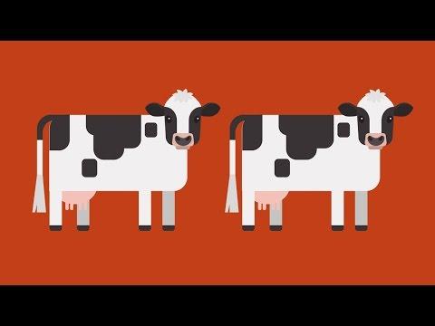 Как появились коровы