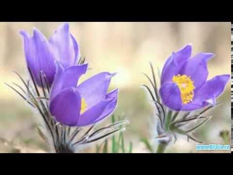 Весна фото картинки, весенние пейзажи цветы природа