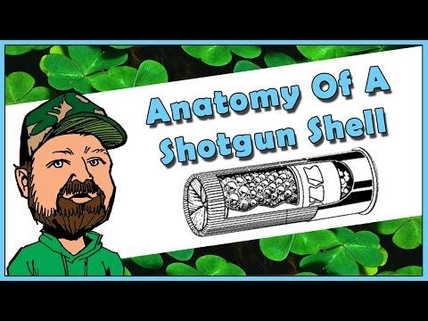 A Look At Shotgun Shot Shells - Components & Function - Hull Primer Powder  Shot Wad & Lead Shot