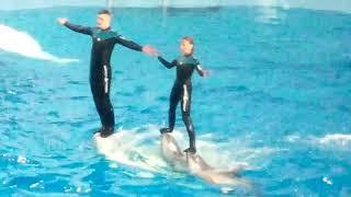 СОЧИ! ПАРК РИВЬЕРА! Танец дельфинов и полярных китов!!! август 2019