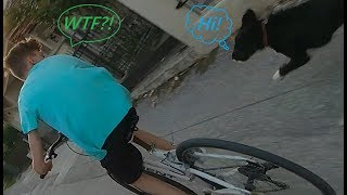 Angry Dogs VS Bikes - When Dogs Attack Or Just Want To Say Hi?🤔 #1
