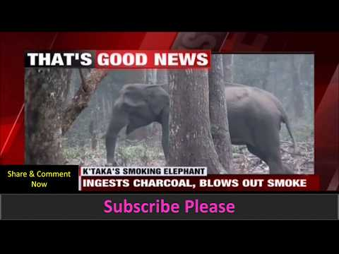 Elephant Smoking in the Forest. Viral Video Spread like a fire
