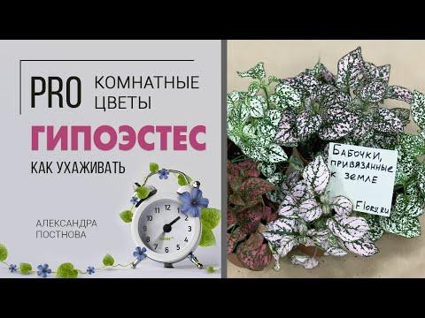 Комнатное растение Гипоэстес | Уход в домашних условиях