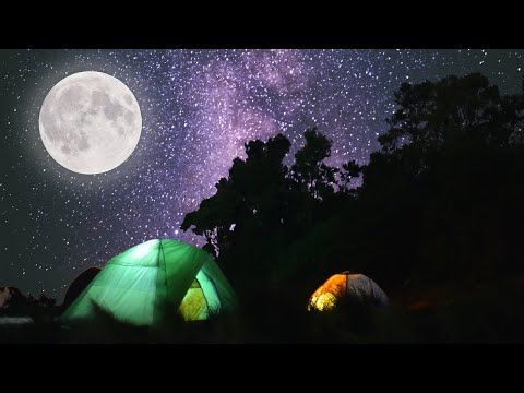Kruger night time nature sounds: Satara | African wildlife & animal, beautiful Kruger sightings