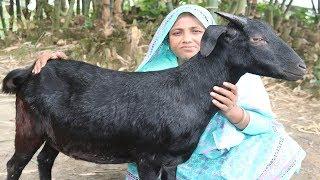 Full Goat Biryani Recipe Yummy Mutton Biryani Curry Traditional Goat Biryani Recipe Village Food