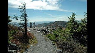 Spruce Trail