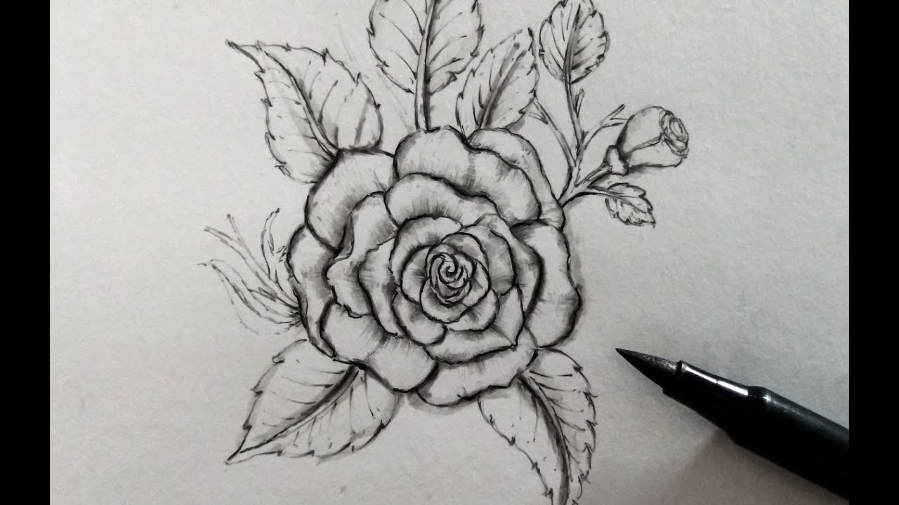 How to draw a rose easy step by step realistic pencil drawing on youtube