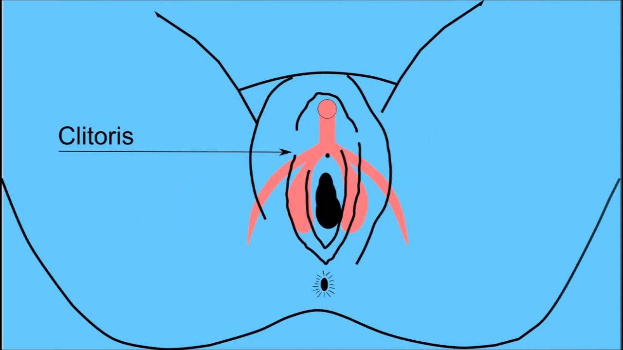 sex-how-do-you-find-the-clitoris-ness-stripper