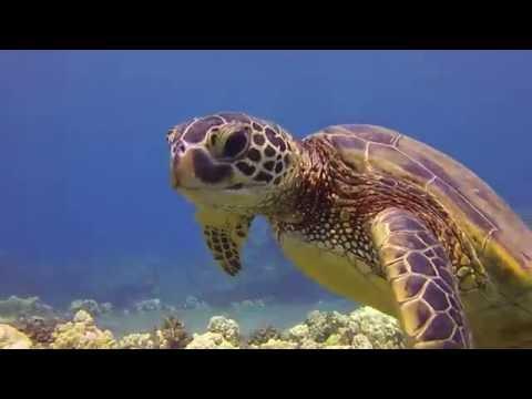 Mala Pier - Best Shore Dives, Maui Hawaii